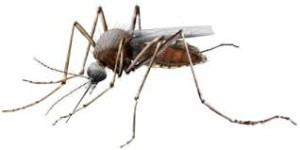 solar outdoor mosquito zapper